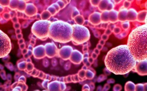Чаще всего фолликулярную ангину вызывают стрептококки (90% всех случаев).