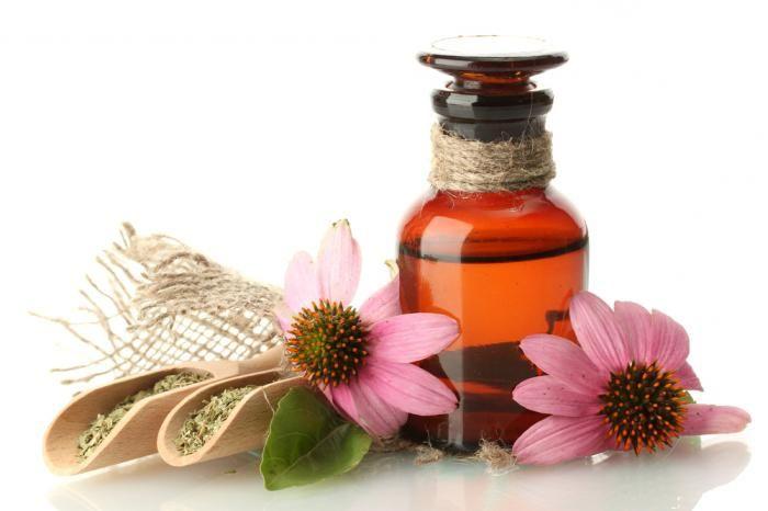 На фото цветки эхинацеи – натурального природного иммуномодулятора
