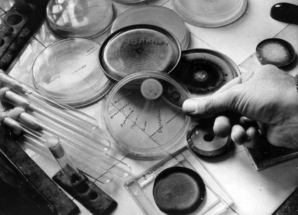 Пенициллин – первый антибиотик, полученный микробиологом Александром Флемингом в 1928 году