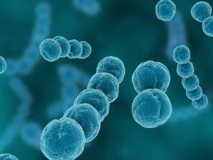 Гемолитический стрептококк - частый возбудитель ангины