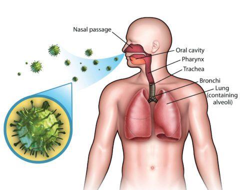 Инфекции, вызываемы вирусами и бактериями
