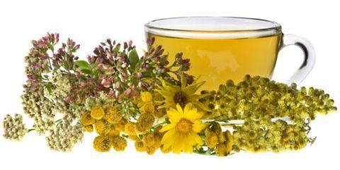 Лекарственные травы от горла детям эффективны и безопасны