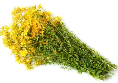 Трава зверобоя поможет смягчить воспаленное горло