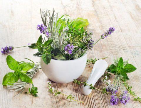 Фото. Лекарственные травы для приготовления растворов при полоскании горла